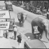 The circus comes to town and elephants parade down Tazewell�s Main Street, [1930]. Tazewell County Public Library Photographs (online collection). Library of Virginia, Richmond, VA. icon